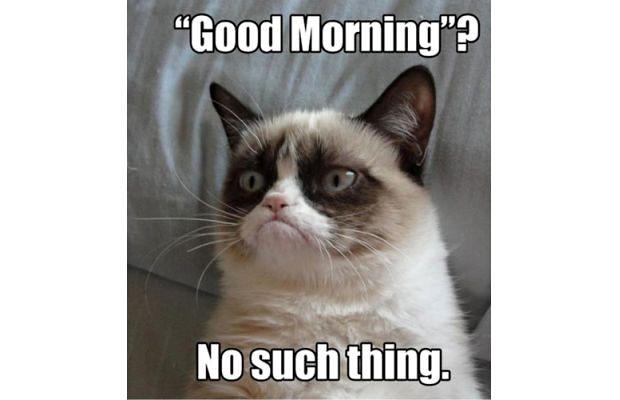 great-grumpy-cat-memes-19