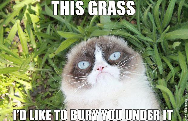 great-grumpy-cat-memes-2