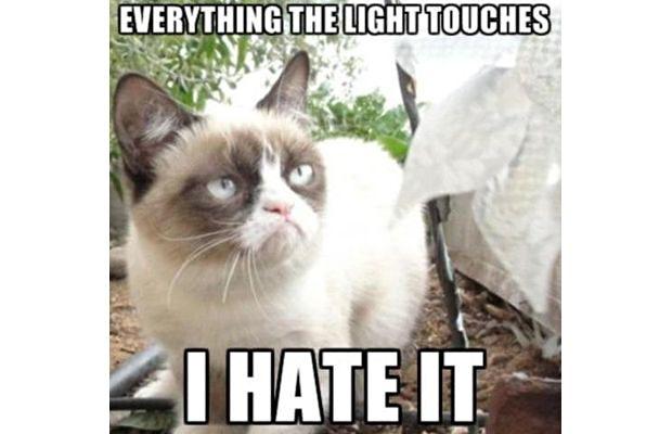 great-grumpy-cat-memes-22