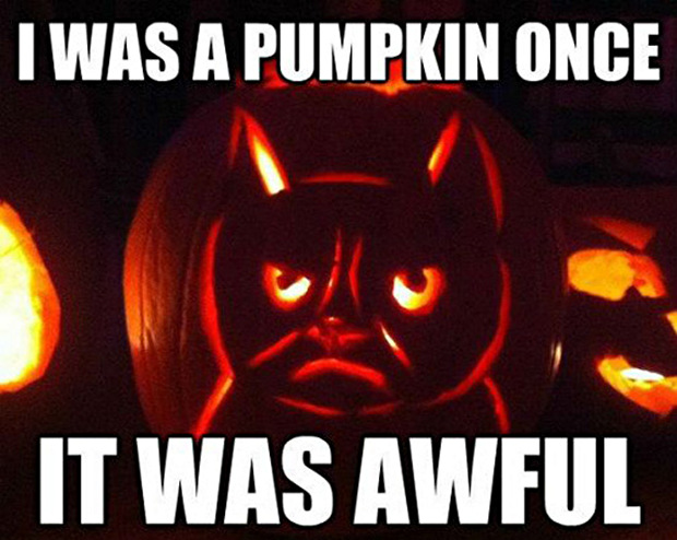 great-grumpy-cat-memes-23