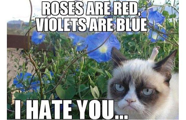great-grumpy-cat-memes-26