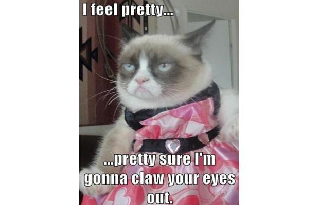 great-grumpy-cat-memes-28