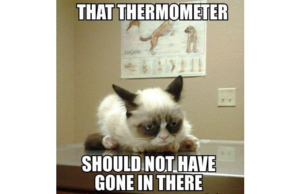 great-grumpy-cat-memes-29