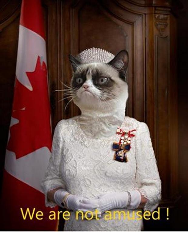 great-grumpy-cat-memes-31