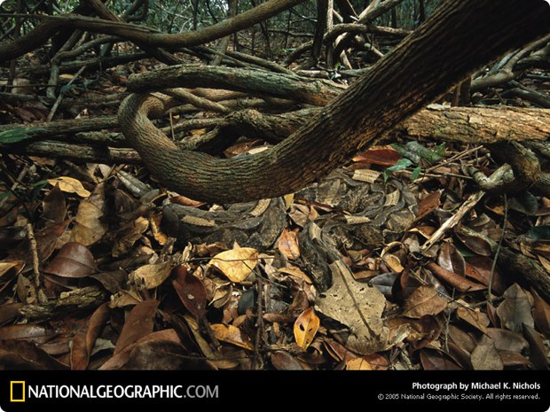 clever-camouflaged-animals-25