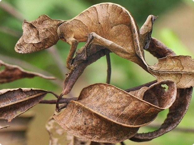 clever-camouflaged-animals-3