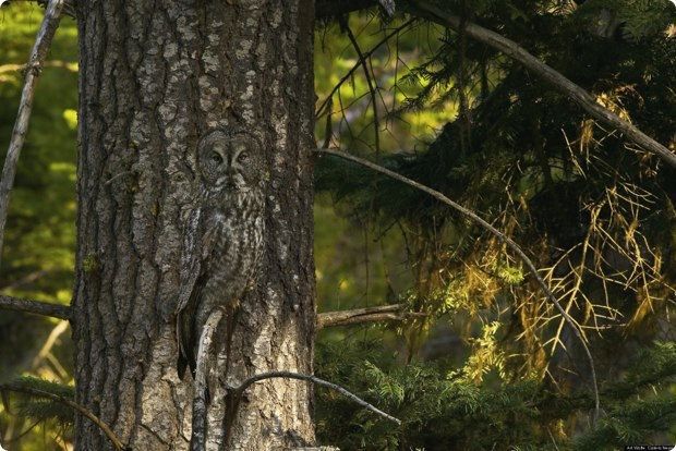 clever-camouflaged-animals-33
