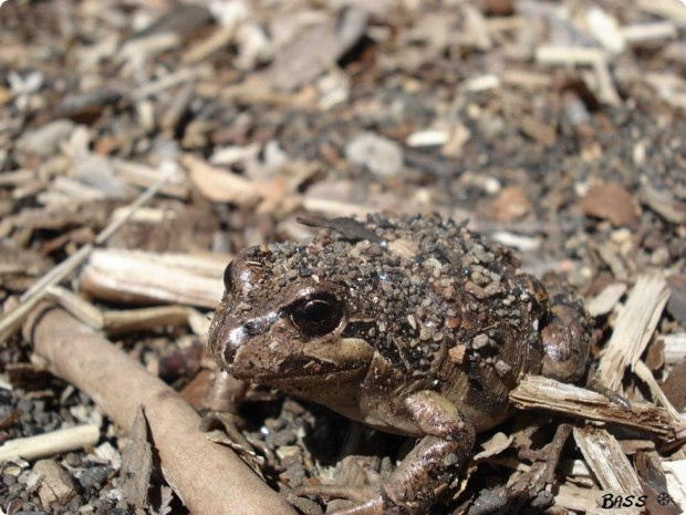 clever-camouflaged-animals-35