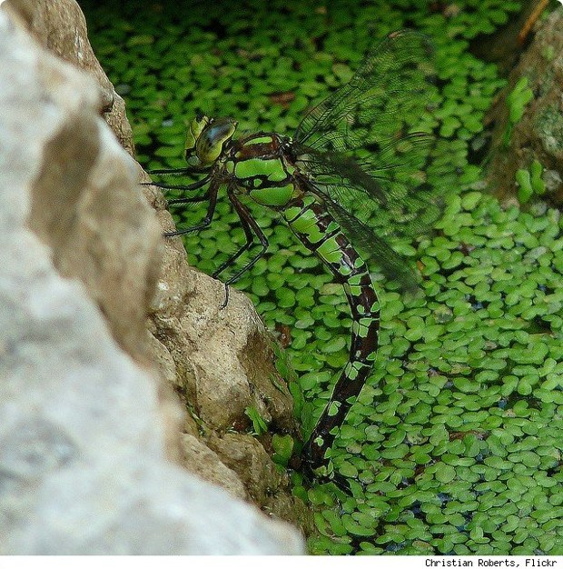 clever-camouflaged-animals-5