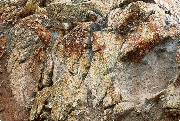 clever-camouflaged-animals-7