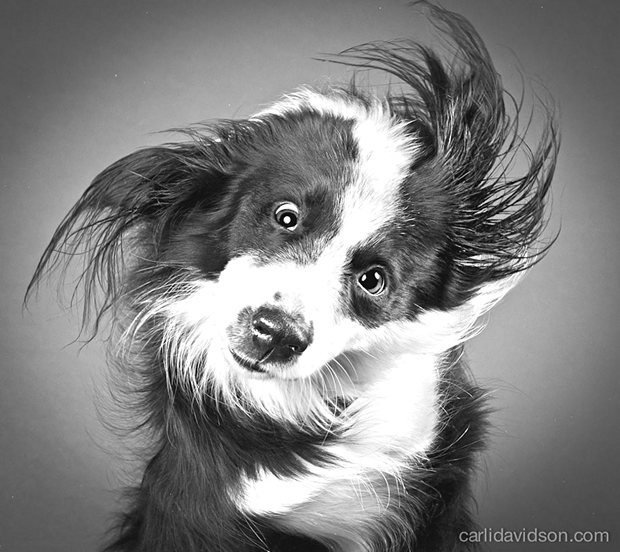 dogs-shaking-heads-pictures-carli-davidoson-12