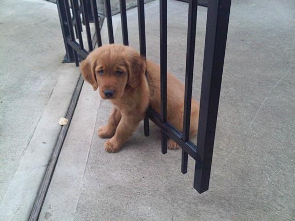 funny-sad-dogs-stuck-10