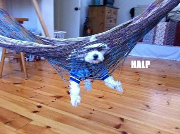 Sad, Yet Funny Pictures of Dogs Getting Stuck