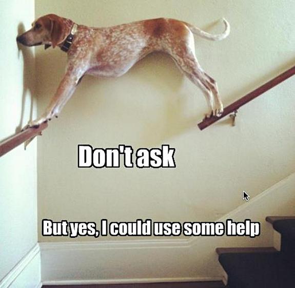 funny-sad-dogs-stuck-14