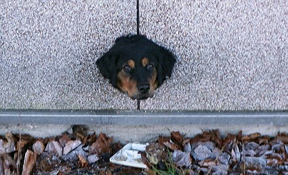 funny-sad-dogs-stuck-23