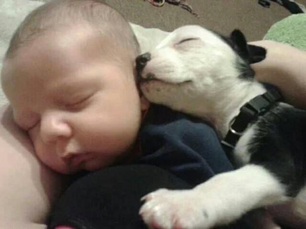 pictures-puppies-babies-10