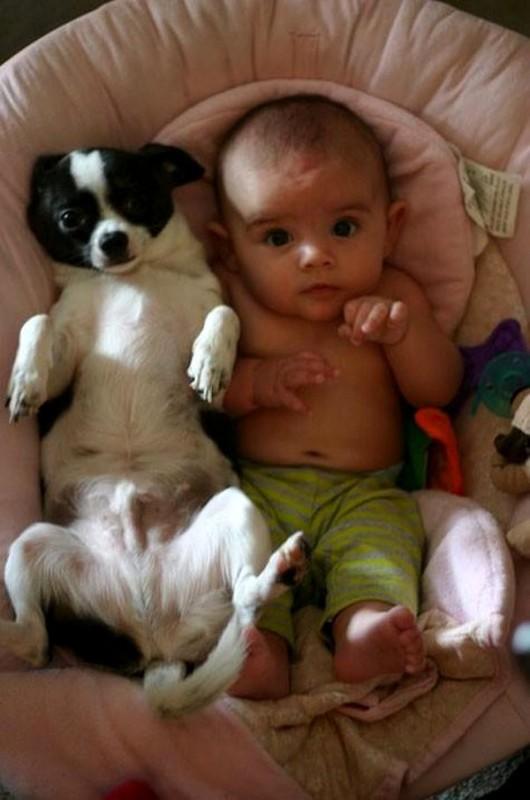 pictures-puppies-babies-25