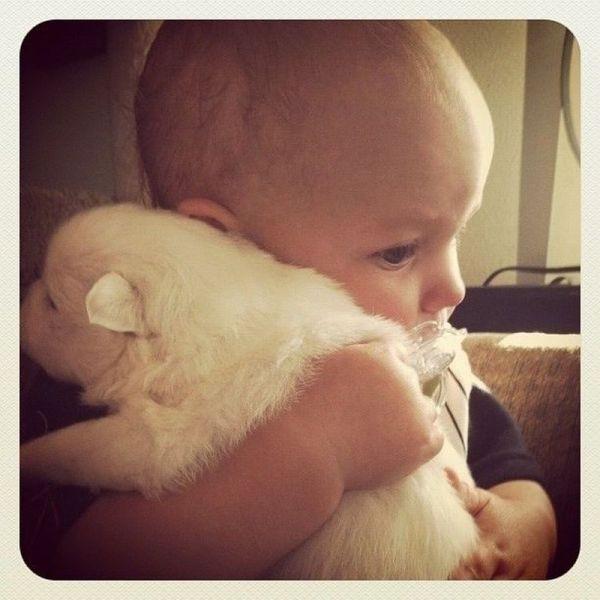 pictures-puppies-babies-27