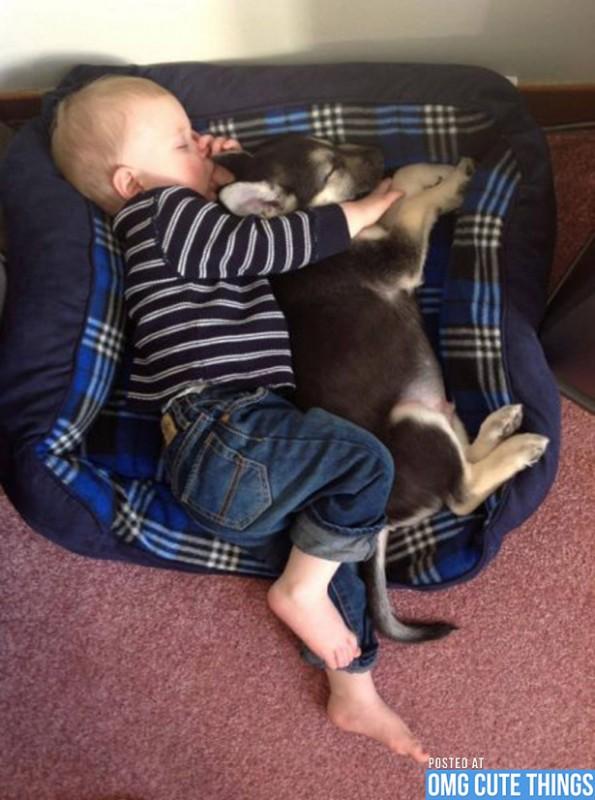 pictures-puppies-babies-30