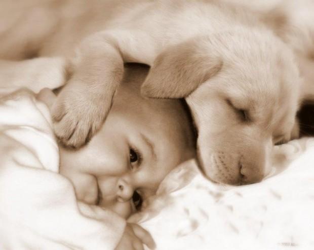 pictures-puppies-babies-32