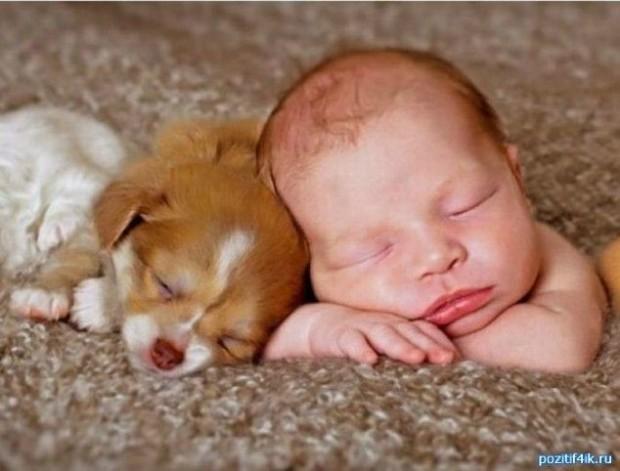 pictures-puppies-babies-4