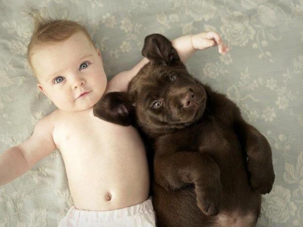 pictures-puppies-babies-5