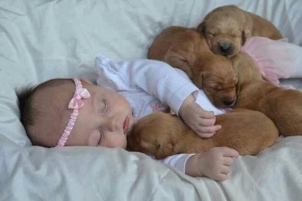 pictures-puppies-babies-7