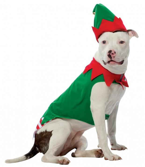 213528_elf_dog_1_1
