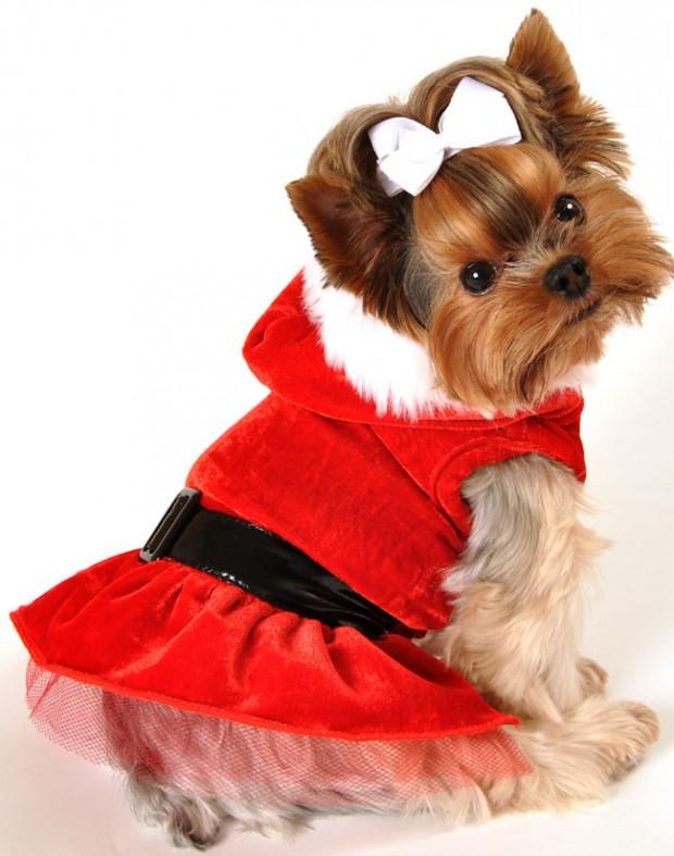 Dog Apparel AP760M Holiday Santa Dress Puppy Pet