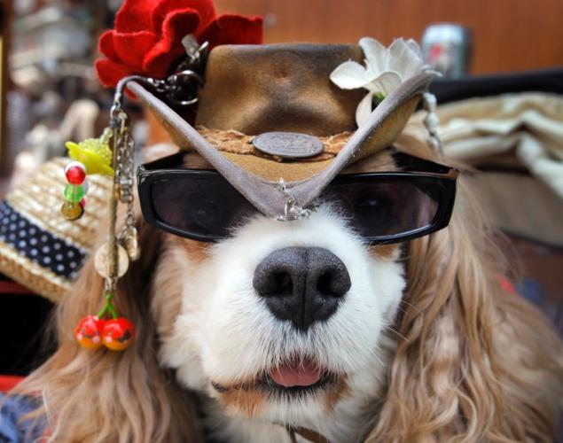 Dogs Wearing Sunglasses_8