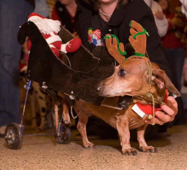Reindeer-with-Sleigh-Dog-Costume