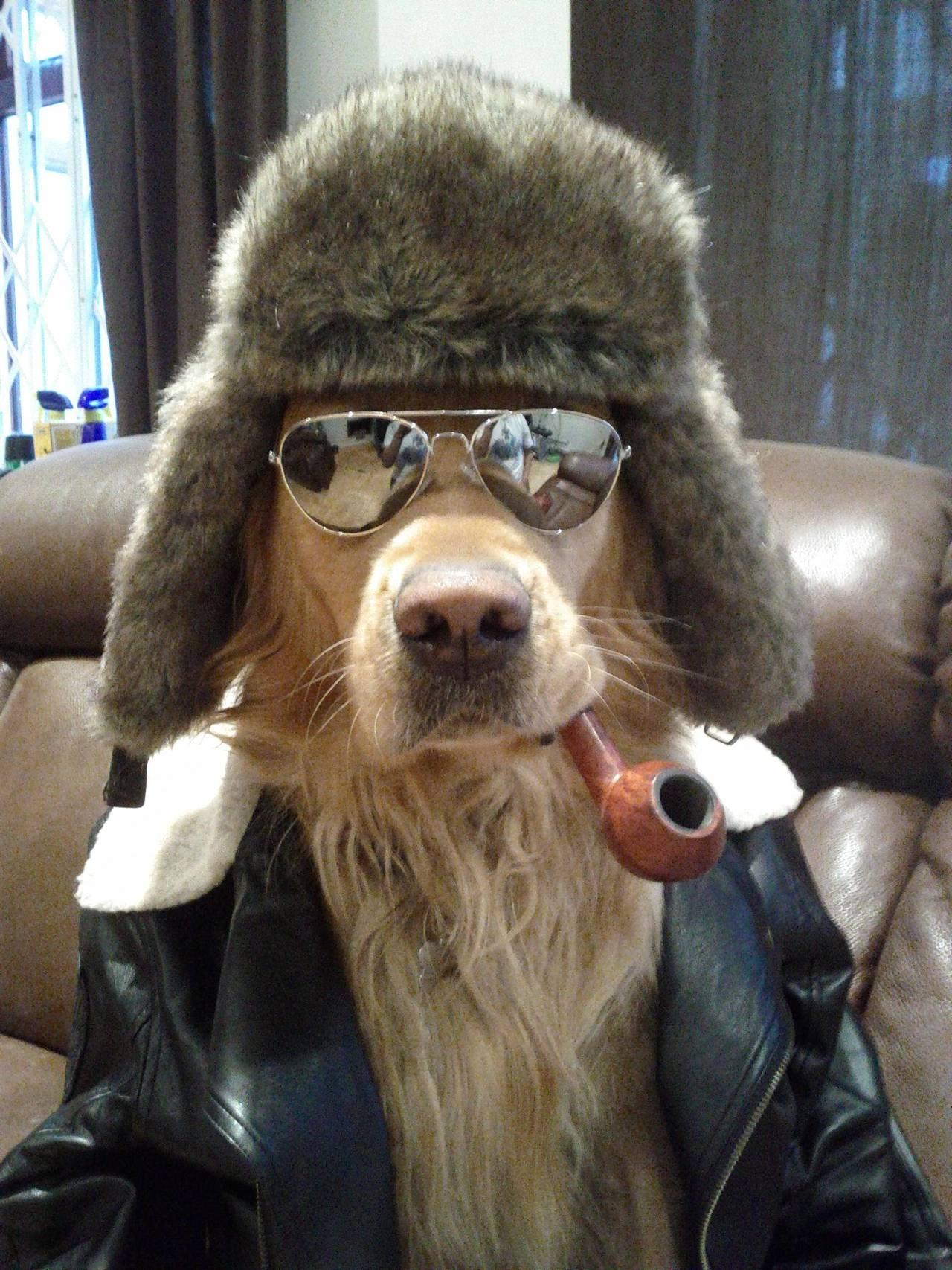 dog with wayfarer sunglasses