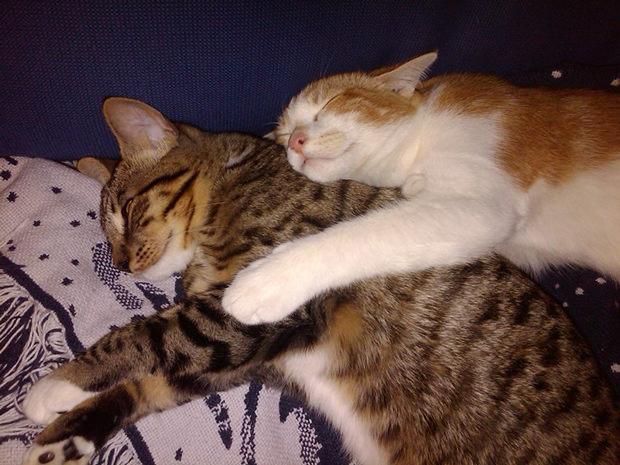 cats-sleeping-awkward-positions-14