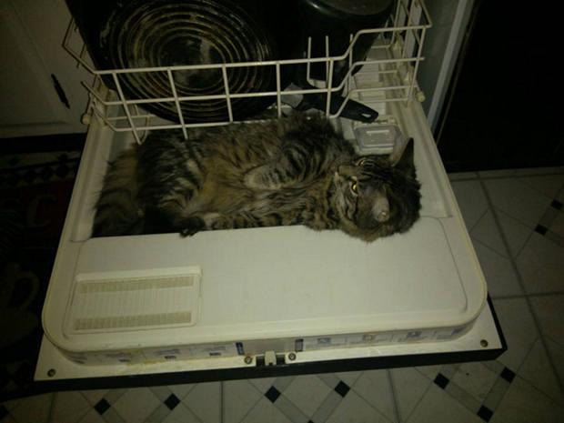 cats-sleeping-awkward-positions-15