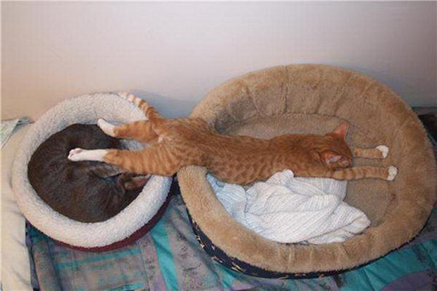 cats-sleeping-awkward-positions-21