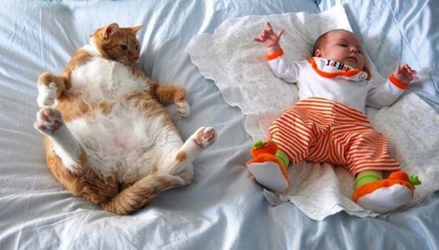 cats-sleeping-awkward-positions-22