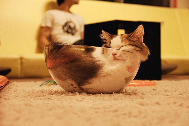 cats-sleeping-awkward-positions-29
