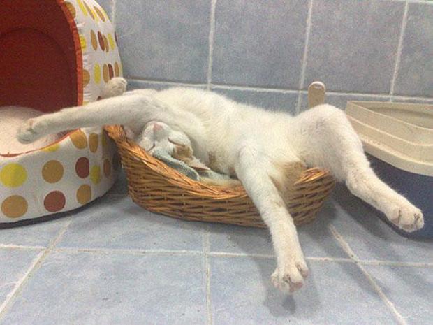 cats-sleeping-awkward-positions-31