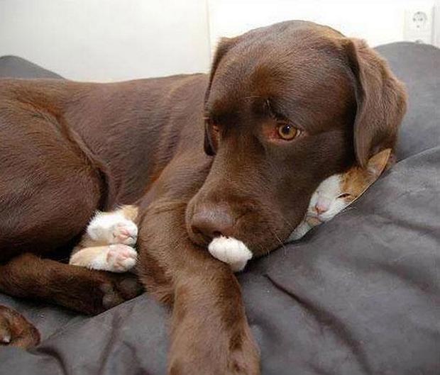cats-sleeping-awkward-positions-32