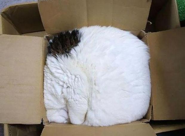 cats-sleeping-awkward-positions-33