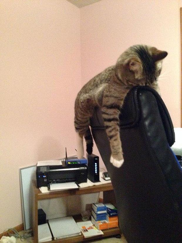cats-sleeping-awkward-positions-35