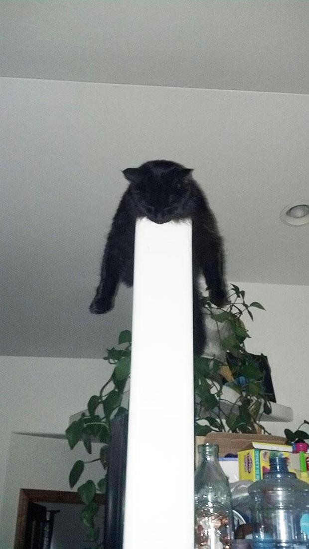 cats-sleeping-awkward-positions-37