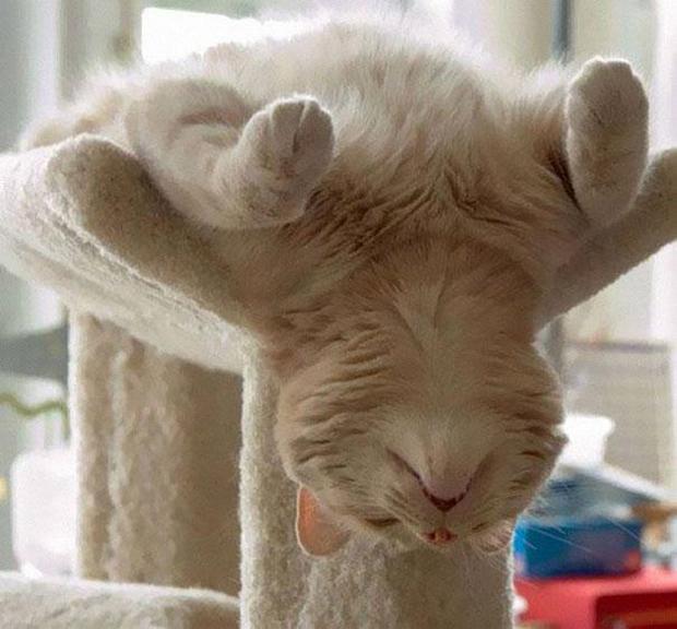 cats-sleeping-awkward-positions-38