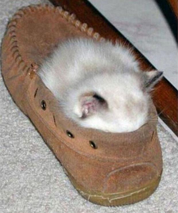 cats-sleeping-awkward-positions-39