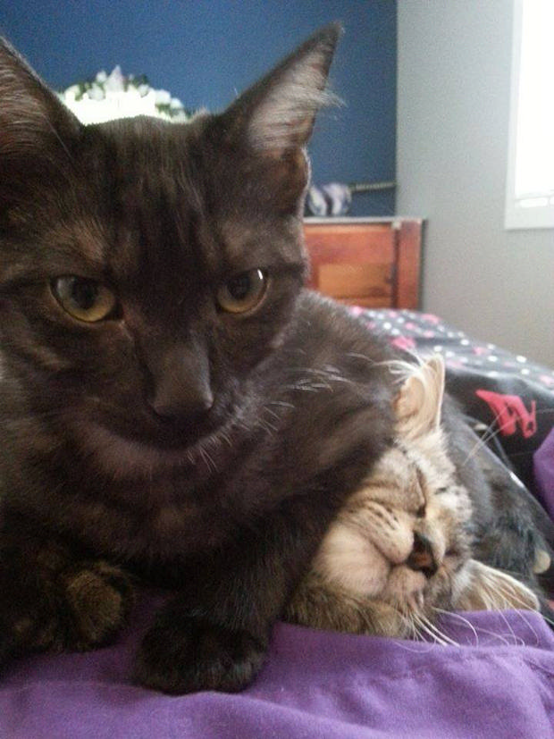cats-sleeping-awkward-positions-4