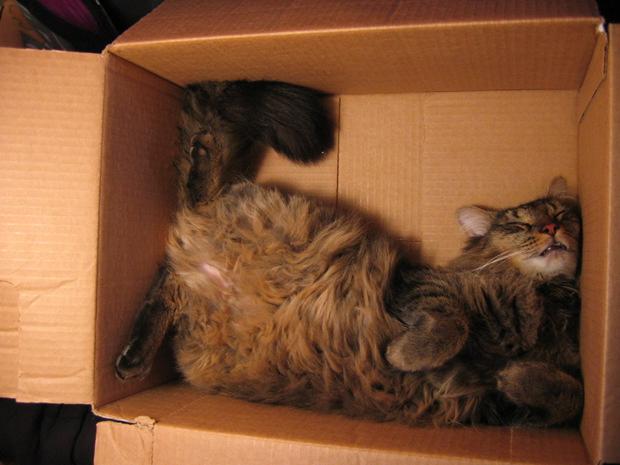 cats-sleeping-awkward-positions-42