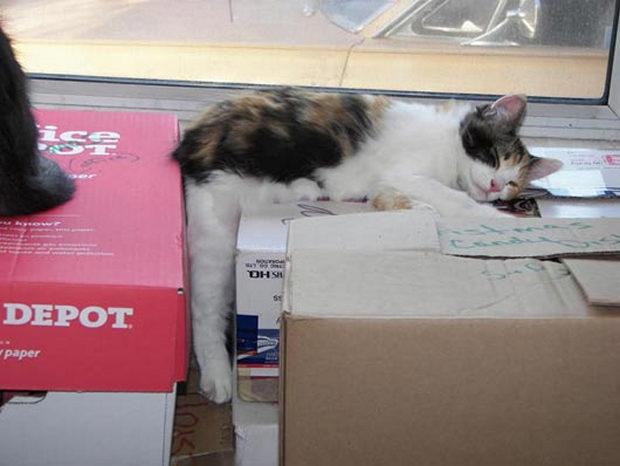 cats-sleeping-awkward-positions-44