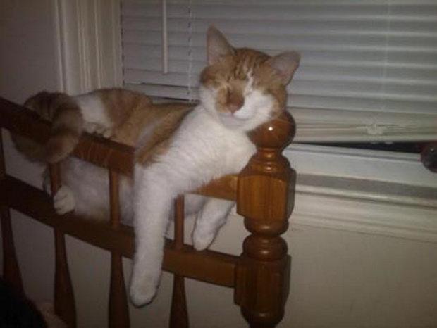 cats-sleeping-awkward-positions-45
