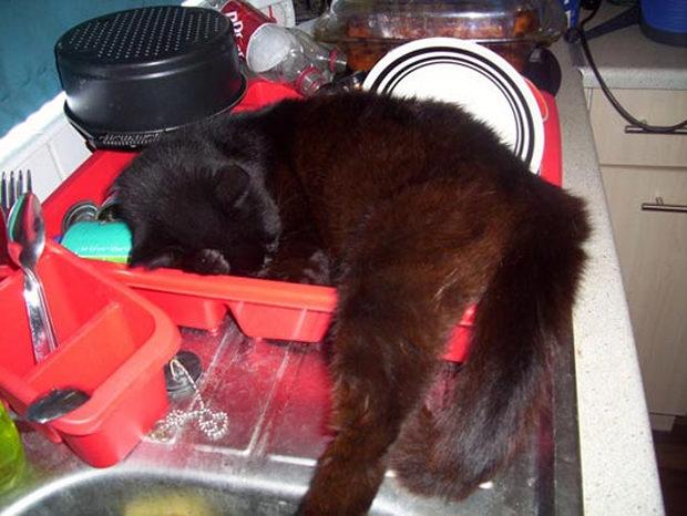 cats-sleeping-awkward-positions-47