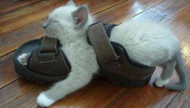 cats-sleeping-awkward-positions-48